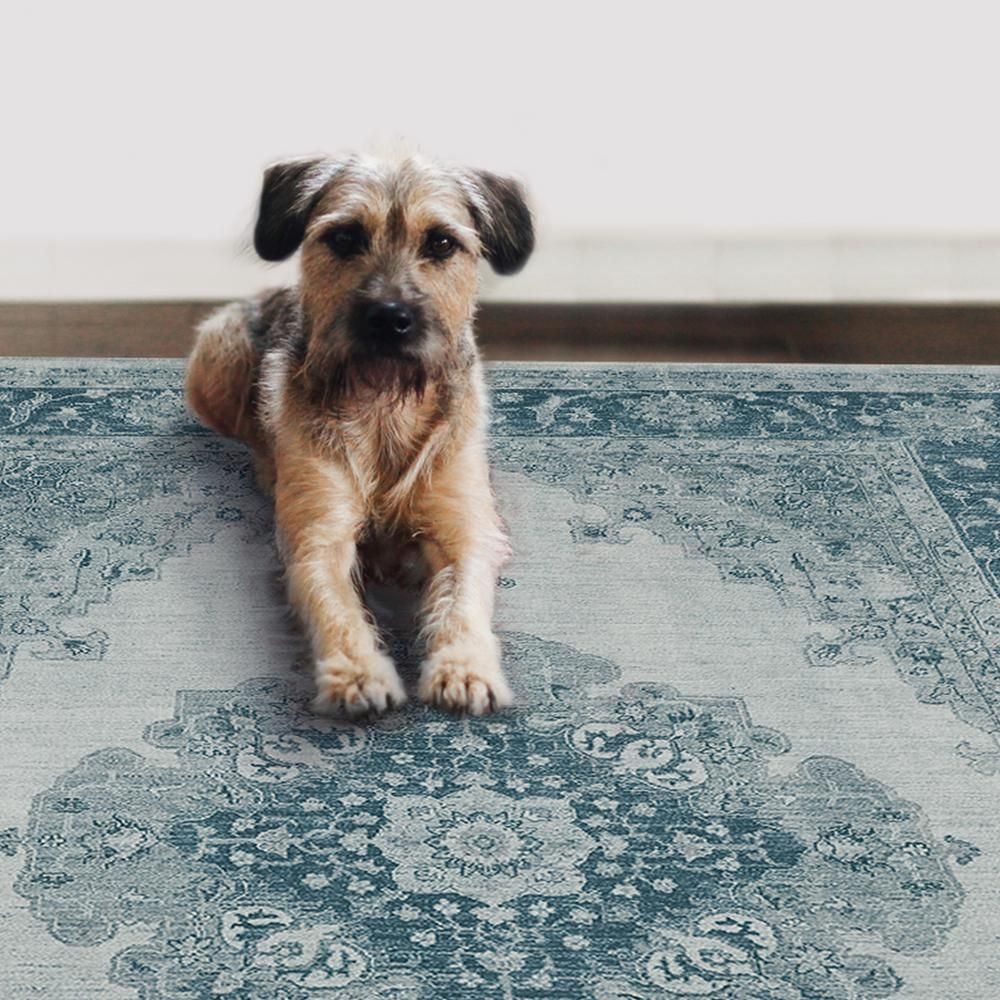 pet friendly rugs